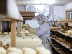 [사진] '쫄깃한 치즈'