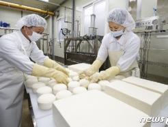 [사진] '쫄깃하고 부드러운 치즈가 되길 바라며'