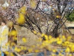 '봄꽃이 활짝'