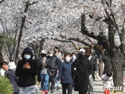 [사진] '답답함에 벚꽃 산책 나선 시민들'