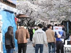 [사진] 2m 거리유지 캠페인 펼쳐지는 여의도 벚꽃길