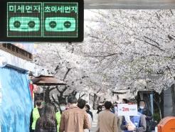 [사진] 벚꽃길 2m 거리 유지해요