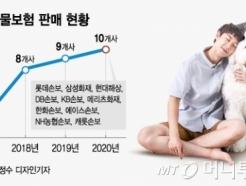 """""""펫보험 팔수록 손해""""…동물병원 치료비, 보험사도 두렵다"""