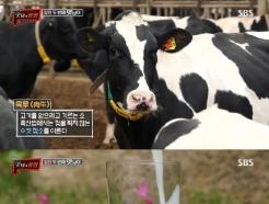 """'맛남의 광장' 백종원, 낙농업 붕괴 우려…""""우유 수입해서 먹게 될 수도"""""""