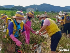 [사진] 대한적십자사, 수해농가 복구 지원