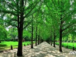 [르포]맑게 갠 남이섬, 침수 흔적없이 싱그러운 숲길