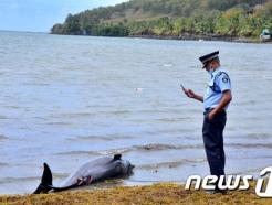 모리셔스의 비극…함께 죽어간 기름 범벅의 돌고래 어미와 새끼