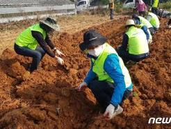 [사진] 수확기 농촌 일손돕는 농협중앙회