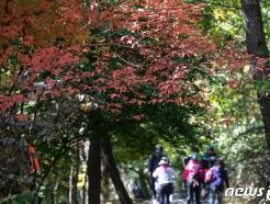 [사진] '가을산으로'