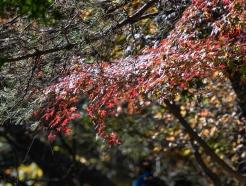 [사진] '가을 산행'