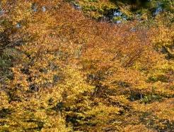 [사진] 단풍철 '가을 한 컷'