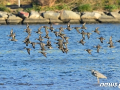 [사진] 형산강 찾아온 겨울철새