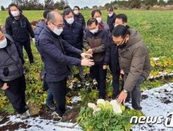 [사진] 제주도 월동무 재배 농가 찾은 유찬형 농협중앙회 부회장