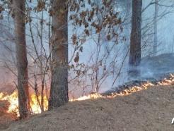 동해시 부곡 야산서 화재…0.3ha 소실, 인명피해 없어