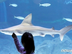 [사진] '안녕 상어야'