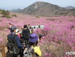 [사진] 휴일 비슬산 꽃놀이