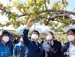 [사진] '배 재배농가의 생육 상태는?'