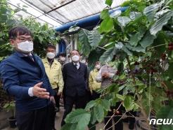 [사진] 전남 화순 커피 재배농가 방문한 허태웅 청장