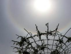[사진] 신랑·신부 머리 위에 햇무리