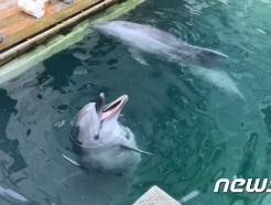 제주 마린파크서 이어지는 돌고래 폐사…'낙원이'도 죽었다