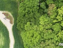 [사진] 상림공원 청보리밭