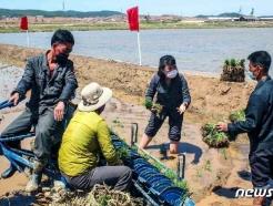 """[사진] 북한 """"모내기에 역량과 수단을 총동원해 끝내자"""""""