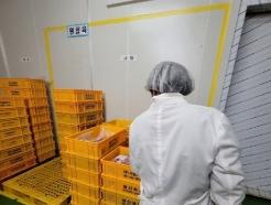 용인시, 16일부터 학교급식 납품 한우 유전자 검사