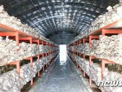 [사진] 북한의 평안북도 태천버섯공장의 모습
