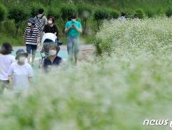 [사진] 새하얗게 핀 메밀꽃