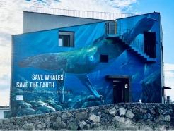 보스아고라 비영리단체 위세이브오션스, 제주도에 고래 보호 벽화 제작