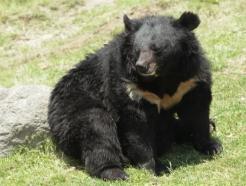 용인 농장 곰 2마리 탈출했다더니 '거짓말'…처음부터 1마리였다
