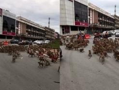 [영상] 태국 원숭이들, 도로 점거해 패싸움… 시내 교통 마비
