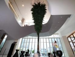 천장에서 자라나는 나무…롯데백화점 동탄점 '논엘로퀀트'