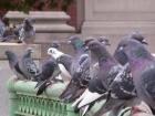 '암 탐지견·암 판독 비둘기' 명의가 따로 없네