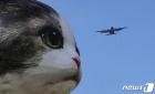 '고양이가 커졌어요'