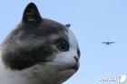 '거대 고양이의 습격?'