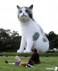 '대형 고양이 곁에 누워'