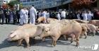 """[포토 is] """"돼지 잔반사료 왜 안되나""""… 농민 뿔났다"""