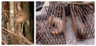 코로나19 동물 감염…우리집 멍멍이·야옹이 안전할까?