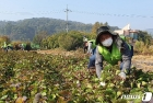 농협중앙회 임직원, 수확기 농촌 일손돕기