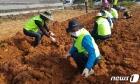 수확기 농촌 일손돕는 농협중앙회