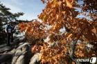 가을옷 갈아입는 산 찾은 시민들