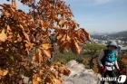 단풍철 등산 즐기는 시민들
