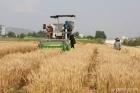 """글로벌 식량위기 """"밀·콩 자급률 높여라"""""""