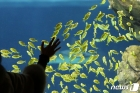 '해양 생물을 만나다'
