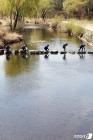 세계 물의 날, 수중 정화 활동