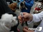 대전 대덕구, 반려동물 광견병 무료 예방접종…12일~5월5일
