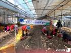 구례지역 농축협 임직원들 수확철 맞은 감자캐기 지원