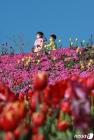 형형색색 꽃 피운 함양생태체험장