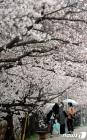 [오늘의 날씨] 충북·세종(16일, 금)…흐리고 돌풍 동반 비